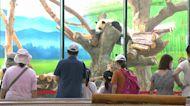 暑假最後週末! 親子出遊搶看貓熊、企鵝