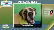Pet of the Day: Thumbelina