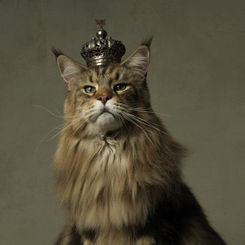 King cat Marie Cecile Thijs