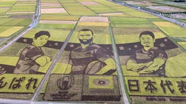 Rice Paddy Art in Saitama Celebrates Japanese Rugby Players