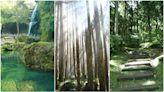 【2021全台避暑森林推薦】太平山、東眼山、溪頭銀杏森林、阿里山、清境農場全台避暑仙境總整理~