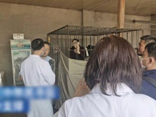 因病被生父鎖鐵籠17年 呼和浩特男子獲救送院