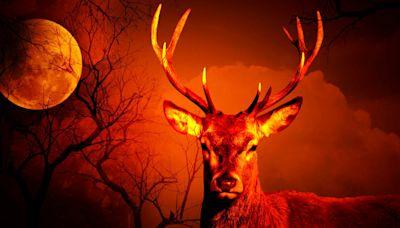 Zombies, Semen, and Big Racks: Inside The Texas Deer Breeding Industry