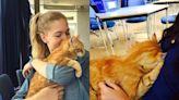 可愛校貓胖橘來者不拒 每天讓學生吸飽消除課業壓力! | 寵毛星球 | 新奇 | NOWnews今日新聞