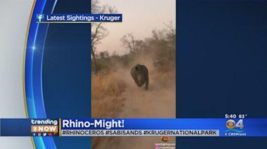 Trending Video: Tourists Make Narrow Escape As Rhino Charges On Safari