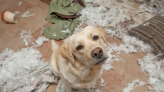 8 Life Hacks for Dog Owners, Like Baby Powder Between Baths!