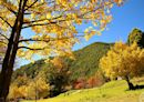 清境農場、武陵農場、福壽山農場三大高山農場 旅展齊推優惠 | 蕃新聞