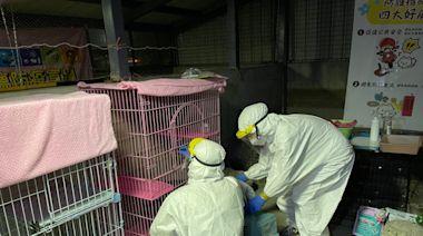 一家染疫住院獨留小貓 北市出動緊急安置創首例 | 蘋果新聞網 | 蘋果日報