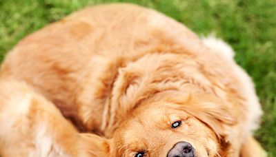 New Study Shows Dogs May Be the Key to Detecting Lyme Disease