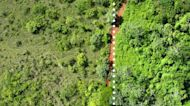 How 12,000 Tons Of Orange Peels Turned Wasteland Into Lush Jungle