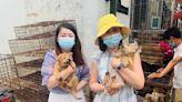 無視武肺「嚐野味」! 中國狗肉節起跑! 江蘇肉品公司:禁食狗肉否定中國傳統