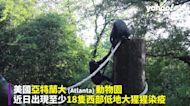 美動物園爆18隻大猩猩確診 4隻驗出Delta變異株疑員工傳染