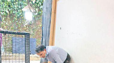 家掘510公斤星光藍寶石簇 料值7.8億元 - 東方日報