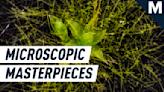 Stunning microscopic videos illuminate some of Earth's deeply hidden mysteries