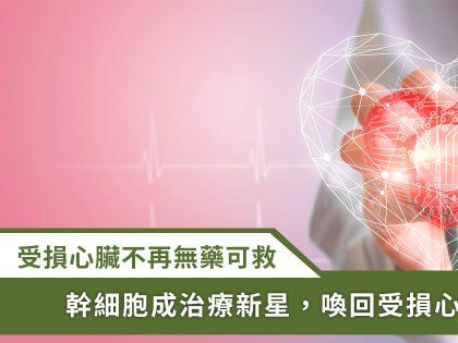 治癒受傷心肌不是夢!「幹細胞」成為心臟再生新寵兒