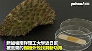 榴槤殼丟掉太浪費!新加坡做成「ok繃」 還能加速癒合