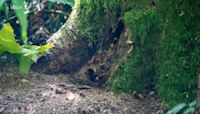 Washington state officials find 3rd 'murder hornet' nest