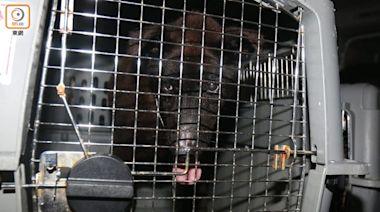 鴨脷洲船塢驚現狗屍兼2虛弱貓狗 69歲英籍漢涉虐畜被捕