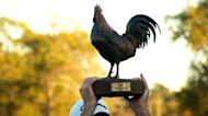 2021 Sanderson Farms Championship preview