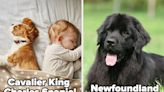The 14 Most Affectionate Dog Breeds That Will Love And Snuggle You Endlessly