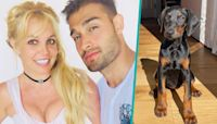 Britney Spears' Fiancé Sam Asghari Surprises Her With New Doberman Puppy To 'Protect' Her