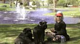 A more comfortable goodbye? Vets bring pet euthanasia home