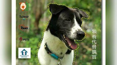 香港拯救貓狗協會狗狗領養日 9隻狗狗等待領養