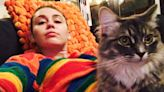 Hollywood's most pampered cats from Karl Lagerfeld's feline heir to Taylor Swift