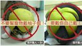 超萌?獸醫警告:千萬別幫寵物戴「柚子帽」!恐中毒、上吐下瀉、皮膚炎