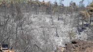 Athens Suburb Shows Wildfire Scars Amid 'Unprecedented Disaster' in Greece