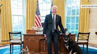 First Lady Jill Biden on Major: 'He is such a sweet loveable dog'