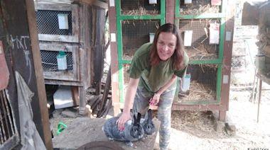 歐盟將廢止籠養:捷克傳統養兔人的噩耗?