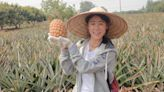 灣區風情|台積電停供晶片給華為 中國就禁運你個菠蘿(程凱) | 蘋果日報