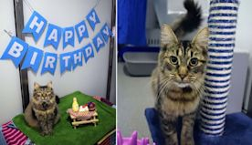 Shelter Threw Cat A Birthday Party To Help Her Get Adopted, But Nobody Came