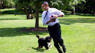 Remembering White House dog, Bo Obama