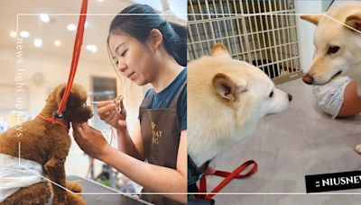 全台20間「4星寵物美容」推薦!媲美spa的高級服務,玫瑰泥讓毛主人都想試一波! | 寵物圈圈 | 妞新聞 niusnews
