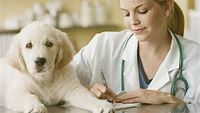 Doxycycline For Dogs: Uses, Dosage, And Side Effects