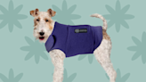 A Thunder Shirt Could Help Your Dog's Anxiety During Summer Storms—These Are Our Top Picks