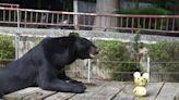 壽山動物園動物吃柚子 線上陪民眾過中秋