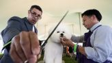 Westminster Kennel Club Dog Show 2021, Day I