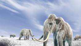 Mammoths 'were driven to extinction by climate change', DNA research shows