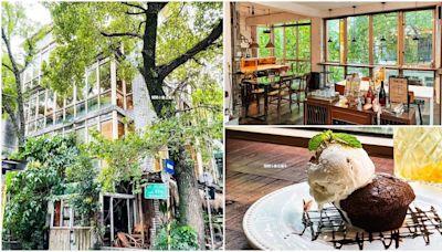 藏身台北巷弄!森林系咖啡廳打卡整片窗景,必點大人味核果布朗尼、燉牛肉派