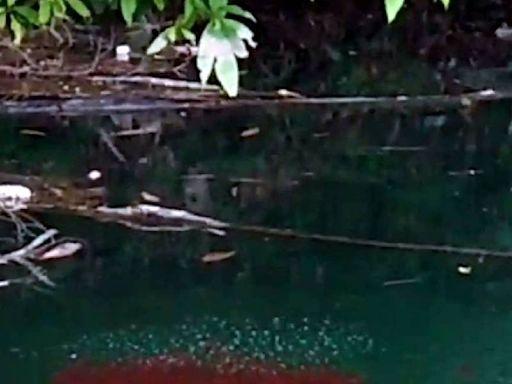 日月潭現水滾異象 原來是魚虎必殺技「死亡泡泡」