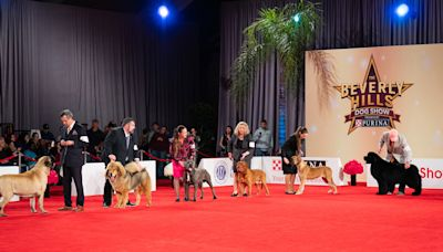 How to watch 2020 Beverly Hills Dog Show: TV channel, start time, live stream, hosts, date
