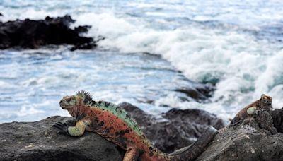 Rewilding: Leonardo DiCaprio pledges $43m to protect and reintroduce rare species on Galapagos Islands