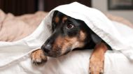 Why do dogs hate fireworks? This vet gives tips to keep your dog safe on July 4th