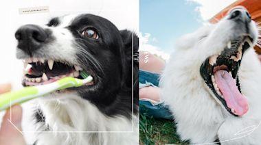 6方法保養及清潔狗狗口腔衛生!牙齦、牙齒顏色可檢查健康,呼氣味還可以測出有無蛀牙   寵物圈圈   妞新聞 niusnews