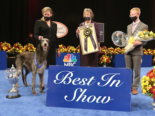 Scottish Deerhound wins Best in Show at 2020 National Dog Show