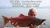 【鮭魚改名潮】鮭魚真面目長這樣 「超狂生存之道」全網笑翻
