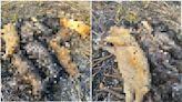 屏東9幼犬遭放火燒死 「屍體碳化躺一排」民眾心碎